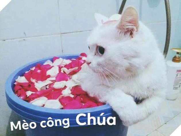 Bộ ảnh tổng hợp những biểu cảm khó đỡ của mèo khiến cộng đồng mạng phát cuồng  7