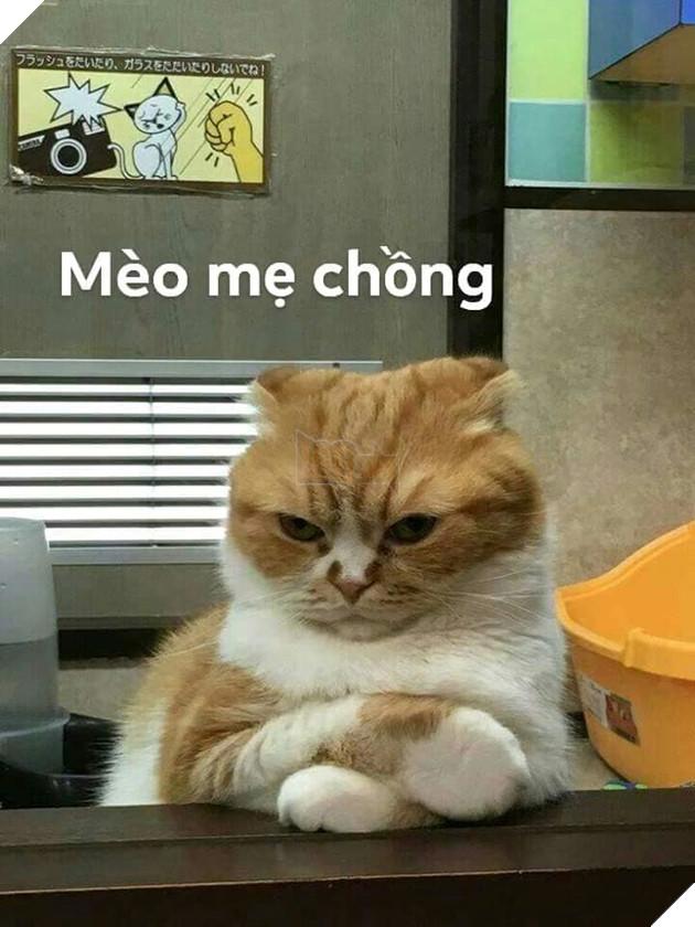Bộ ảnh tổng hợp những biểu cảm khó đỡ của mèo khiến cộng đồng mạng phát cuồng  10