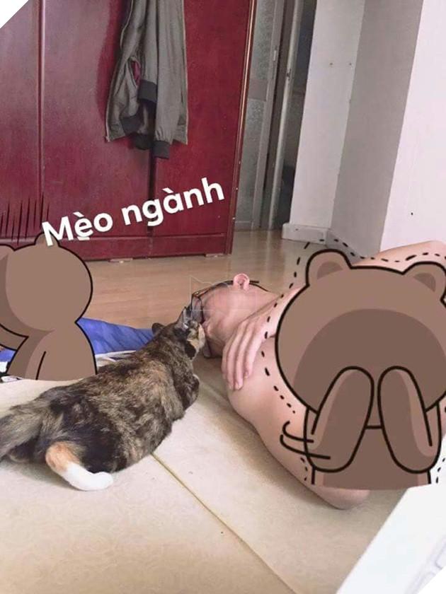 Bộ ảnh tổng hợp những biểu cảm khó đỡ của mèo khiến cộng đồng mạng phát cuồng  11