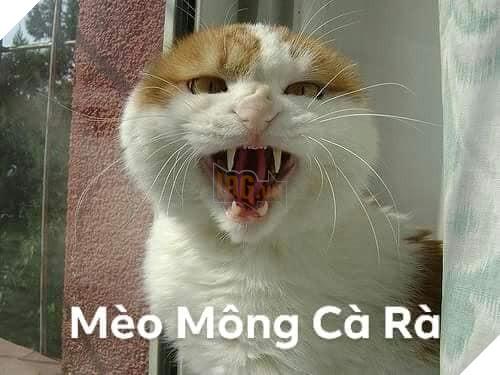 Bộ ảnh tổng hợp những biểu cảm khó đỡ của mèo khiến cộng đồng mạng phát cuồng  12