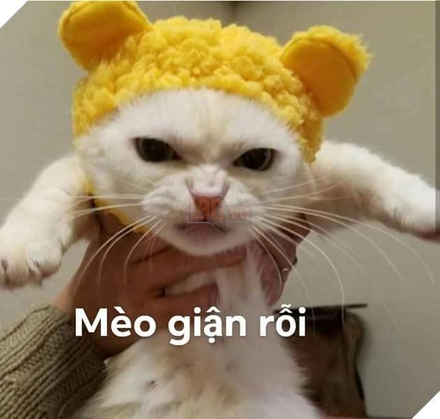 Bộ ảnh tổng hợp những biểu cảm khó đỡ của mèo khiến cộng đồng mạng phát cuồng  14