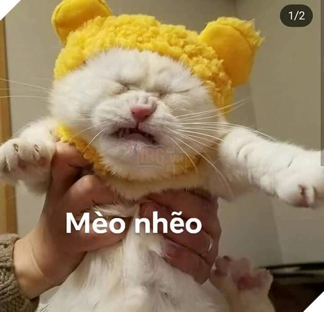 Bộ ảnh tổng hợp những biểu cảm khó đỡ của mèo khiến cộng đồng mạng phát cuồng  15