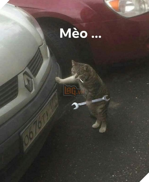 Bộ ảnh tổng hợp những biểu cảm khó đỡ của mèo khiến cộng đồng mạng phát cuồng  16