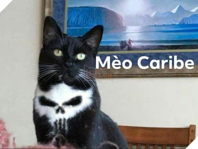 Bộ ảnh tổng hợp những biểu cảm khó đỡ của mèo khiến cộng đồng mạng phát cuồng  17