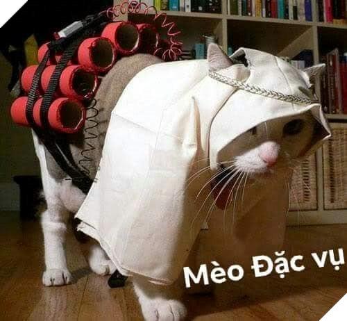 Bộ ảnh tổng hợp những biểu cảm khó đỡ của mèo khiến cộng đồng mạng phát cuồng  19