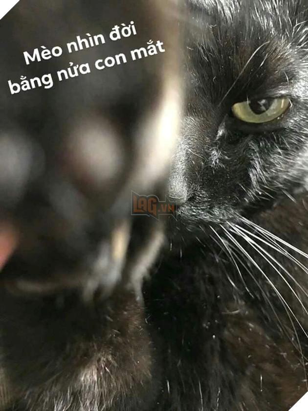 Bộ ảnh tổng hợp những biểu cảm khó đỡ của mèo khiến cộng đồng mạng phát cuồng  20