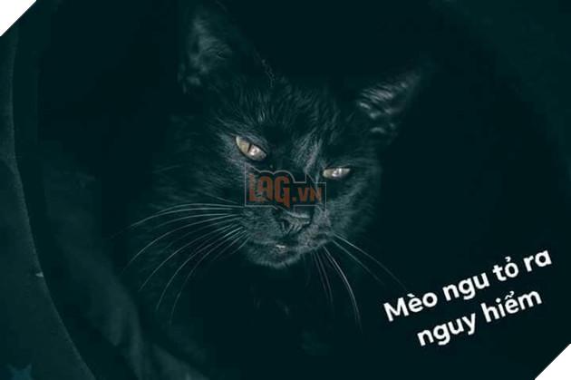 Bộ ảnh tổng hợp những biểu cảm khó đỡ của mèo khiến cộng đồng mạng phát cuồng  22