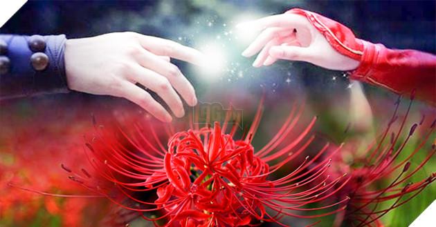 Image result for hoa bỉ ngạn