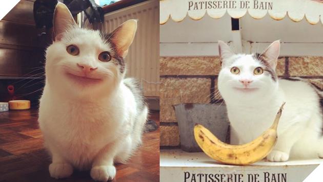 Con mèo có miệng cười đáng sợ
