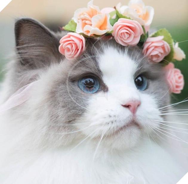 Tên Aurora được chủ nhận đặt dựa theo 'Nàng công chúa ngủ trong rừng' quen thuộc.