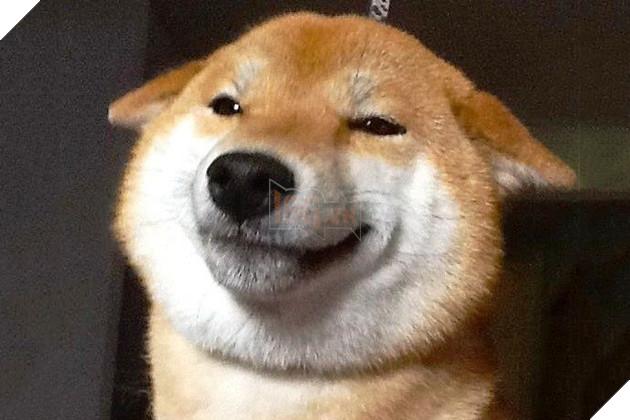 19 ảnh động vật cười dễ thương khiến bạn bất giác mỉm cười theo