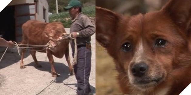 Cảm động tình mẫu tử giữa cô bò và chú cún nhỏ: Chó con nước mắt lưng tròng khi mẹ bò bị bán