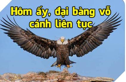 Tổng hợp Meme Họa Mi Không hót nữa đang rất hot trên cộng đồng mạng Facebook 12