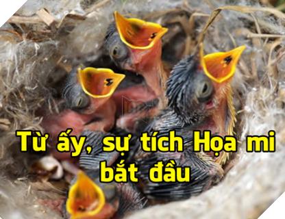 Tổng hợp Meme Họa Mi Không hót nữa đang rất hot trên cộng đồng mạng Facebook 7
