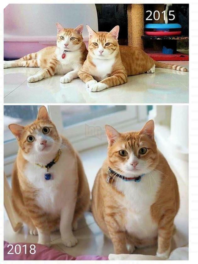 Đôi bạn cùng tiến. Phải béo đều mới là bạn thân!