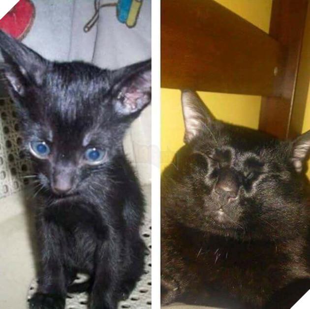 Sen chăm sóc ta kiểu gì mà bây giờ nhìn ta không giống con mèo nữa vậy hả?