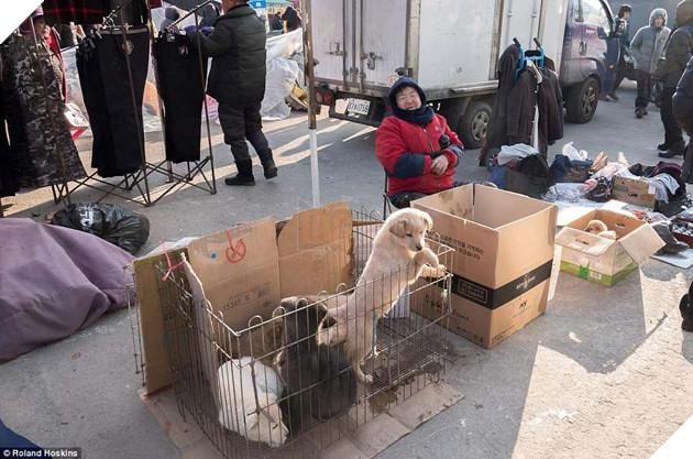 Tại Hàn Quốc chó làm thịt đang khốn khổ vì bầy bán công khai khiến người khác đau lòng 11