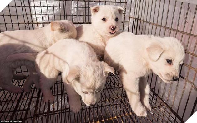 Tại Hàn Quốc chó làm thịt đang khốn khổ vì bầy bán công khai khiến người khác đau lòng 2