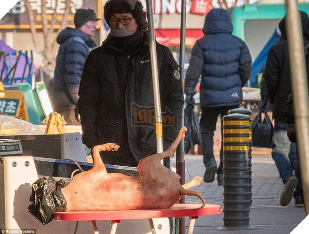 Tại Hàn Quốc chó làm thịt đang khốn khổ vì bầy bán công khai khiến người khác đau lòng 3