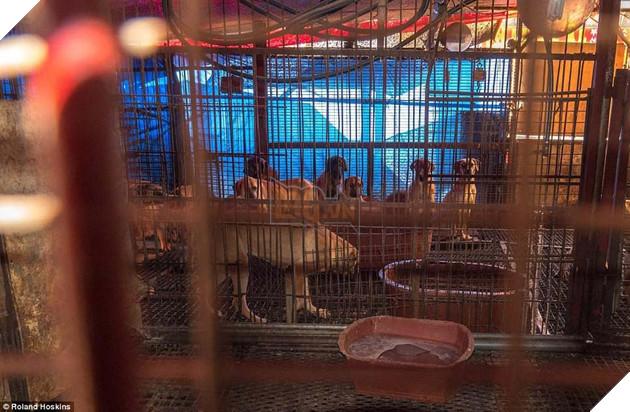 Tại Hàn Quốc chó làm thịt đang khốn khổ vì bầy bán công khai khiến người khác đau lòng 8