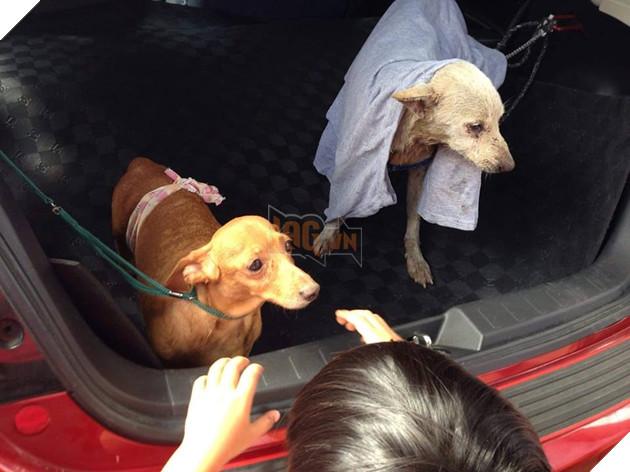 Chú chó ăn mỳ nhưng không bao giờ no bụng, cư dân mạng ứa nước mắt khi nhìn cổ họng nó 6