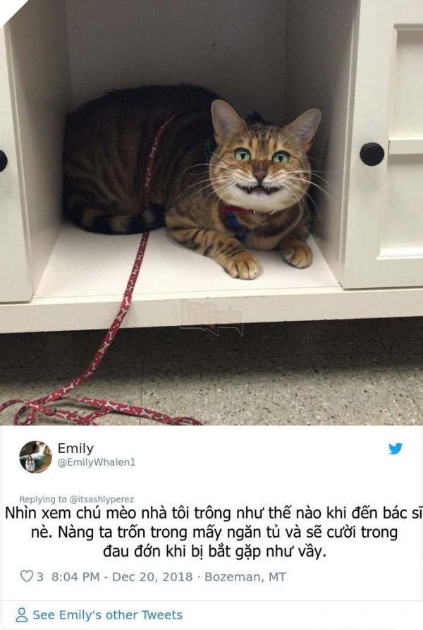 cats hiding from vet 5c1c9e269c0ef 700