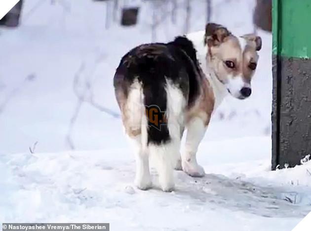Chú chó Hachiko của nước Nga: Suốt nửa năm ngồi đợi chủ trong cái lạnh âm 30 độ C - Ảnh 2.