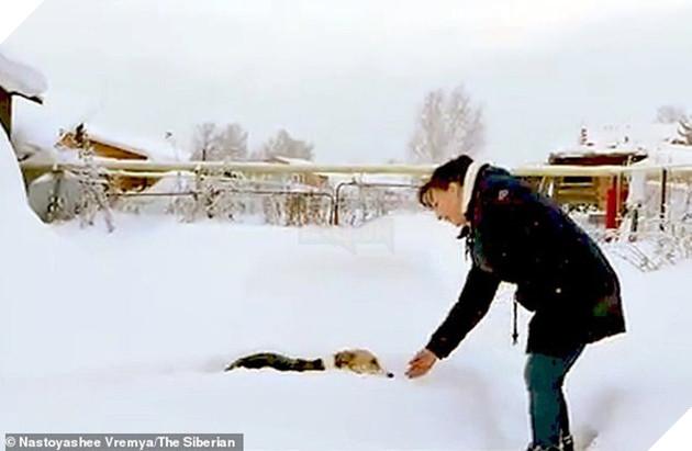 Chú chó Hachiko của nước Nga: Suốt nửa năm ngồi đợi chủ trong cái lạnh âm 30 độ C - Ảnh 3.