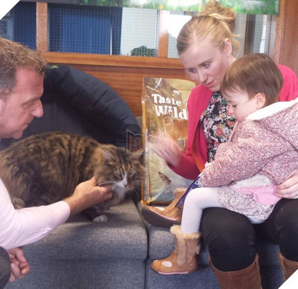 Chú mèo 'đi bụi' 14 tháng được tìm thấy đang 'phè phỡn' tại nhà máy sản xuất thức ăn thú cưng 4