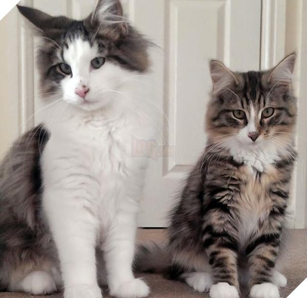 Chú mèo 'đi bụi' 14 tháng được tìm thấy đang 'phè phỡn' tại nhà máy sản xuất thức ăn thú cưng 3