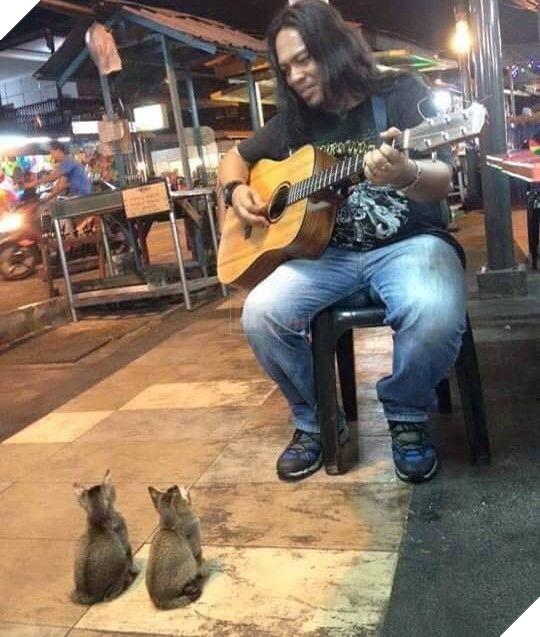 Thương cảm ca sĩ đường phố bị ngó lơ, 4 vị khán giả 'đặc biệt' lũ lượt tới ủng hộ tinh thần