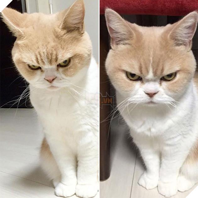 """""""Liệu cái phần hồn mà ngày đủ 3 bữa cho bổn cung đấy chứ lại bàytrò mèo trêu bổn cung đi!"""""""