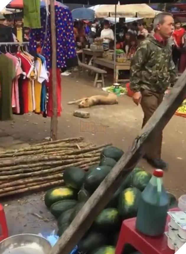 CĐM tìm ra info nam thanh nữ tú ném đá, đánh chết chú chó mẹ mới đẻ vào chợ tìm thức ăn cho đàn con 3