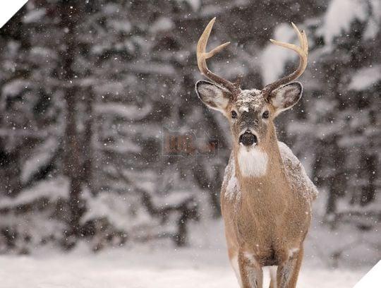 Chronic wasting disease is a prion disease that affects deer, elk, reindeer, sika deer and moose.