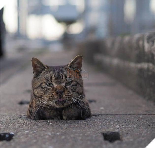 Hiện tại trang Instagram của Nyankichi có đến 104.000 người theo dõi, và anh chỉ dùng nó để post ảnh những chú mèo lỗ cống tinh nghịch này thôi.