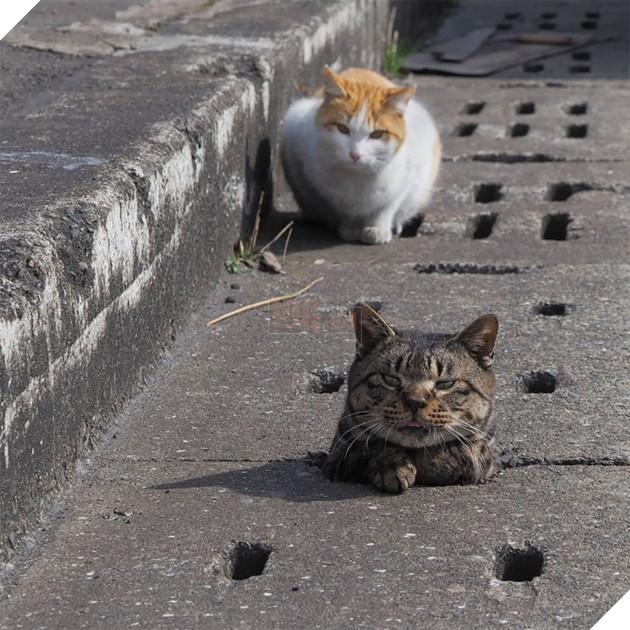 Với những ai đang sinh sống hay du lịch tại Nhật Bản, nếu có một ngày bạn đi ngang qua những khu nào có nhiều lỗ cống như thế này…