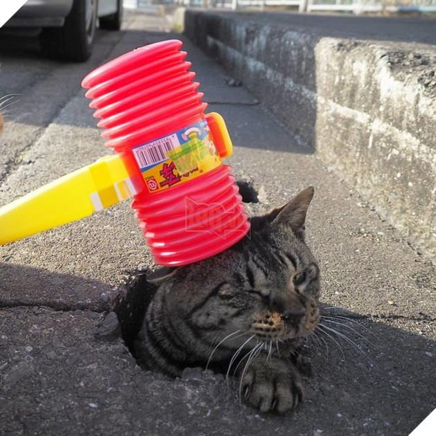 Cuối tuần nào cũng thế, Nyankichi đều ra những lỗ cống này để chơi trò đập chuột với đám mèo nghịch ngợm tò mò này.