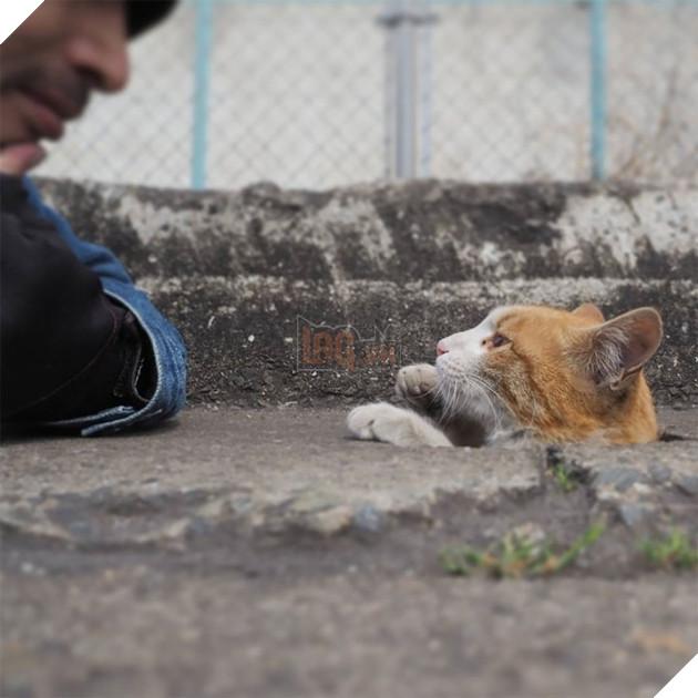 Nyankichi cho biết anh không phải là chủ của con mèo nào ở đây, thế nhưng bây giờ thì chúng đã xem anh là một người bạn thân thiết rồi.