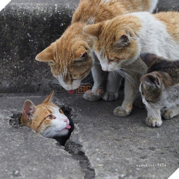 Chúng là những con mèo hoang, từng bị chủ ngược đãi hay bỏ rơi, hoặc chỉ đơn giản là được sinh ra ở những nơi khuất nẻo trên hè phố, tụ tập về đây thành bầy đàn.