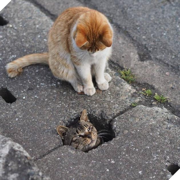 Thỉnh thoảng, nhiều người lại tỏ ra quan ngại rằng việc liên tục đăng tải hình ảnh của những chú mèo sẽ khiến cho nơi ở bí mật của chúng bị lộ.