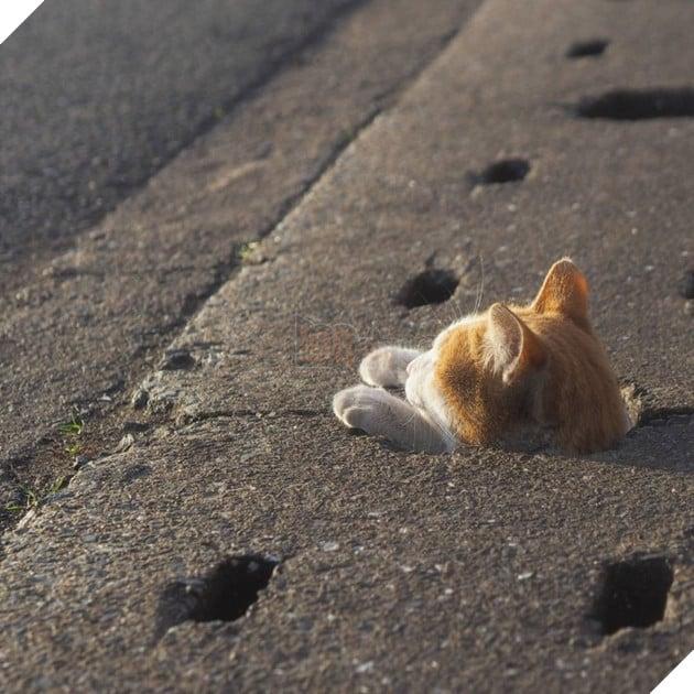 Hy vọng những chú mèo đáng yêu này sẽ được tự do sống cuộc sống vui vẻ vô tư lự của chúng.