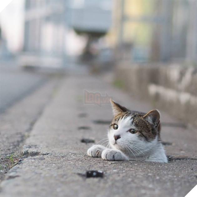 Tận dụng những lỗ cống xếp hàng san sát nhau trên mặt đường, bầy mèo chọn nơi đó làm tụ điểm vui chơi suốt cả ngày đêm.
