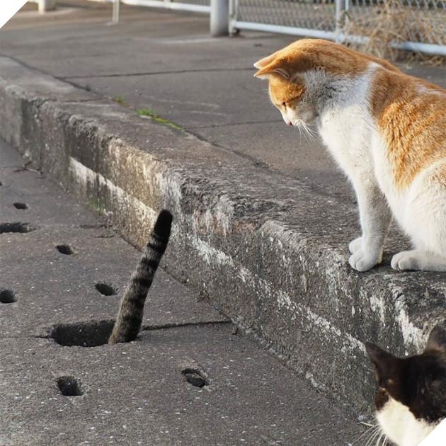 …mà bạn vô tình trông thấy có những con gì đó không phải là chuột ló thụt dưới đó.