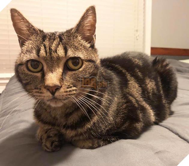 Câu chuyện chú mèo đi lạc 13 năm bất ngờ đoàn tụ với chủ cũ khiến dân mạng cảm động - Ảnh 1.