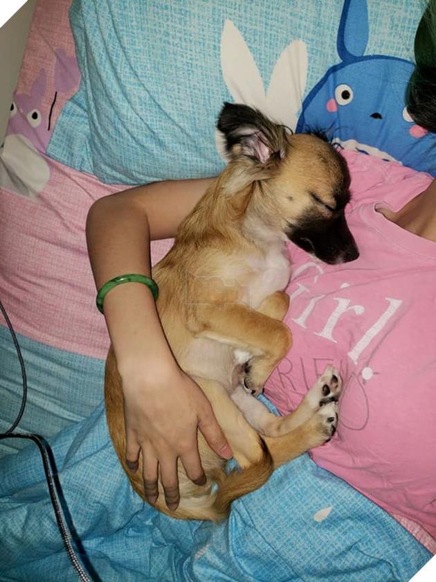Được ôm trọn vào lòng mà ngủ thế này đây! (Nguồn: Subtle Asian Traits).