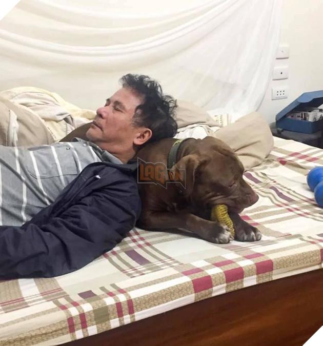 Hoàng thượng và boss ngủ chung… (Nguồn: Đảo chó).