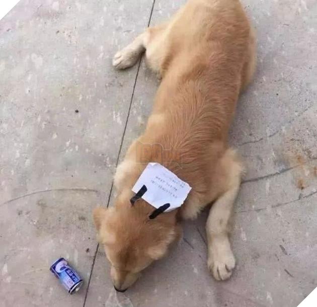Chú chó bỏ nhà đi và quay trở về với một mảnh giấy dán trên đầu