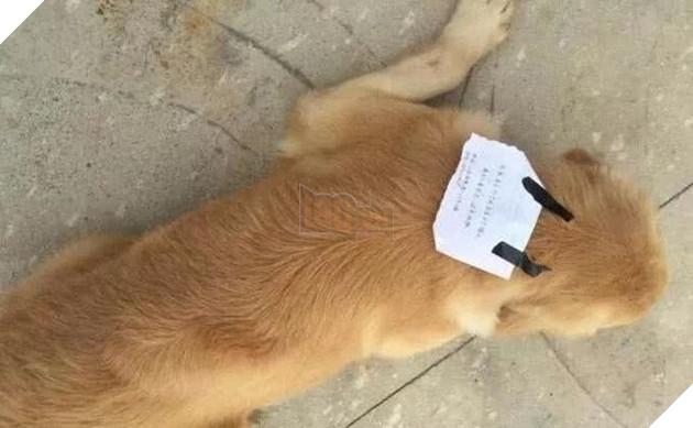 Bị chủ mắng, chú chó bỏ nhà ra đi, lúc trở về còn vác theo cả một khoản nợ