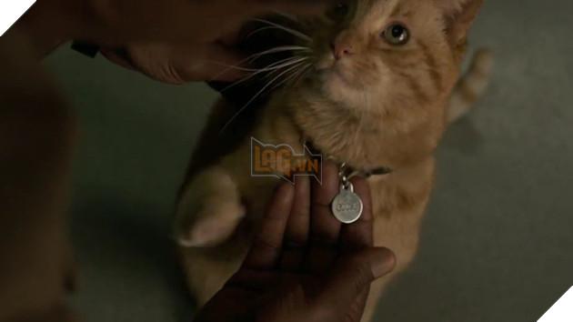 Sự thật kinh dị về con mèo rõ đáng yêu được Nick Fury vuốt ve trong Captain Marvel - Ảnh 2.