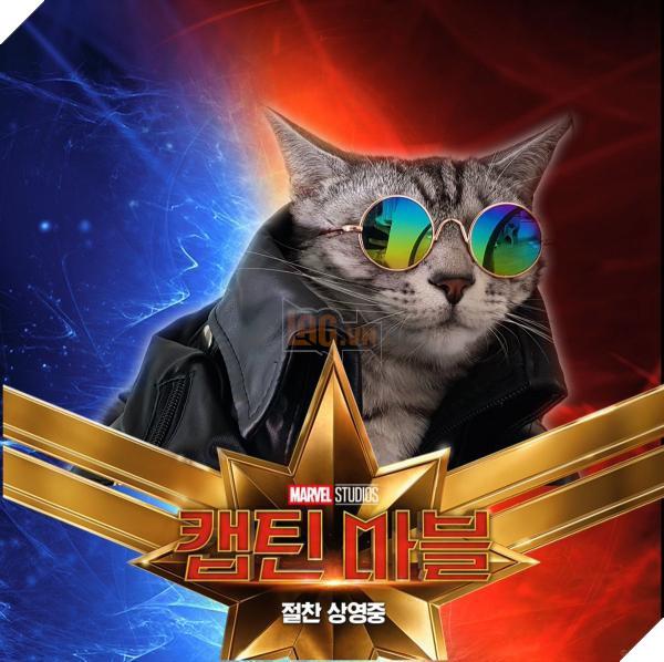 Sau Captain Marvel thì mèo Goose đang trở thành hiện tượng của cộng đồng mạng 12